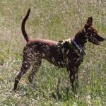 Hundöana juli 2010 035
