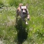 Hundöana juli 2010 039