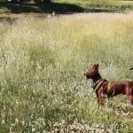 Hundöana juli 2010 041
