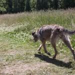 Hundöana juli 2010 075