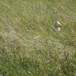 Hundöana juli 2010 123