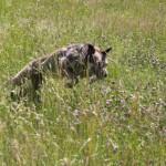 Hundöana juli 2010 129