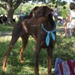 Hundöana juli 2010 337
