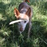 Hundöana juli 2010 347