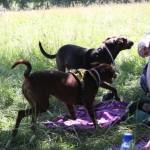 Hundöana juli 2010 444