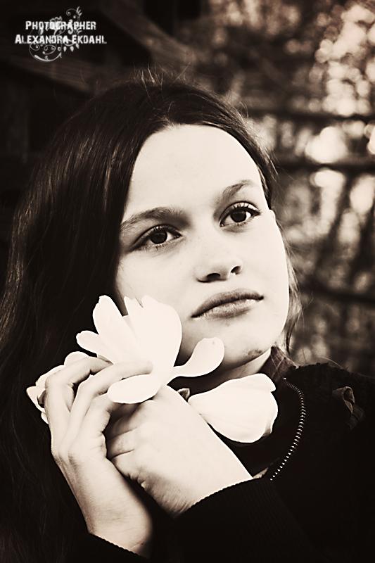 Annual Magnolia Portrait 2016 no 12